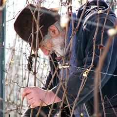 Ottavio (Rising Damp) Tags: winter portrait italy snow work square vineyard italia vine unite pruning valli vigna whitebeard potatura potare