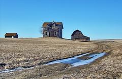 SKSW12a43 RM Miry Creek Farm, Saskatchewan (CanadaGood) Tags: blue brown house canada color colour building tree field barn farm wheat best sk prairie saskatchewan agriculture favourite 2012 canadagood mirycreek thisdecade