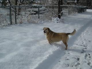 Winnie in the Snow
