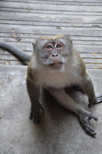 Monkey Business 3 ©  Still ePsiLoN