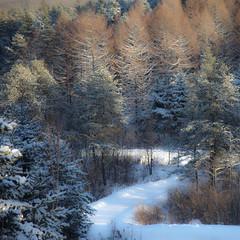 Route de l'Arc-en-ciel...!!! (Denis Collette...!!!) Tags: winter snow canada pine forest pin hiver qubec neige fort sapin mlze notredamedemontauban deniscollette lacducastor mkinac maisondelalune img78032 routedelarcenciel