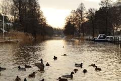 kers Canal IV (AdurianJ) Tags: winter nature sunrise canal vinter europa europe sweden schweden sverige kanal suecia beautifull    nrdico escandinavia    january2012