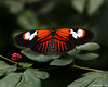WMOAPG_MW_04 (JeffreyADutton) Tags: butterflies indoor magicwings southdeerfieldma wmoapg
