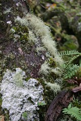 IMG_1907 (sadeik) Tags: wood tree moss oak ghost short lichen moor dartmoor stunt spookey upland copse stunted wistman