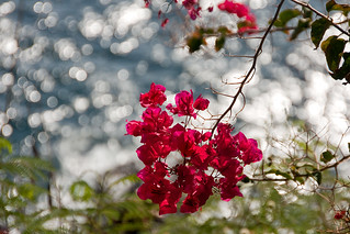 Back with Bougainvillea & Bokeh