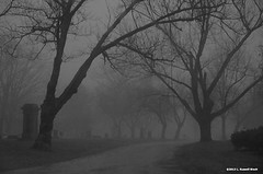 A Path Less Traveled (TooLoose-LeTrek) Tags: tree cemetery grave fog gravestone gravemarker