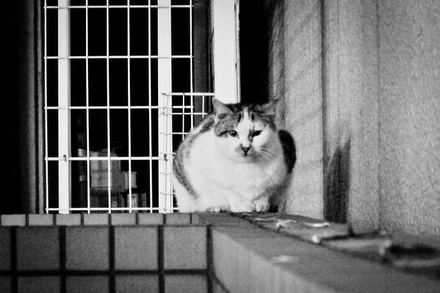 Today's Cat@2012-01-20