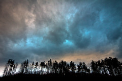 (miche11) Tags: trees sky clouds thechallengefactory