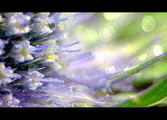 The Meaning Of Life (>Cluke) Tags: flowers abstract hot flower colour macro art nature water digital garden lumix petals cool abstractart awesome digitalart petal panasonic artsy stunning artsyfartsy visualart macrophotography fz150 colourlicious cluke dmcfz150 lumixdmcfz150 panasonicfz150 panasoniclumixfz150 panasoniclumixdmcfz150 panasonicdmcfz150