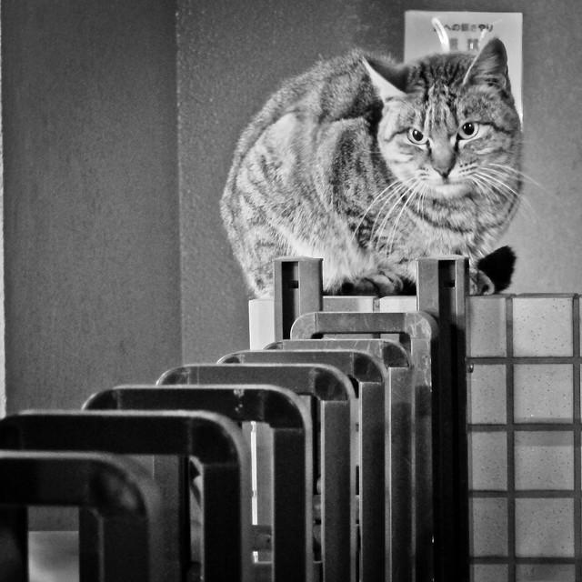 Today's Cat@2012-01-27