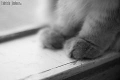 Asuka 2009 (Fabster44) Tags: cat feline gato felino