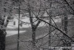 Nevicata in città - Torino, gennaio 2012 (OltreversoLab) Tags: city snow alberi torino neve neige rue turin footprint città impronte paesaggioinnevato patternnaturali