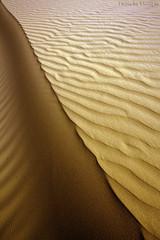 Sandy Abstraction - Explore (TARIQ-M) Tags: shadow abstract art texture landscape sand waves pattern desert patterns dunes wave abstraction riyadh saudiarabia hdr بر الصحراء canoneos5d الرياض صحراء رمال رمل طعس كانون المملكةالعربيةالسعودية الرمل خطوط تجريد صحاري ef1635mmf28liiusm canoneos5dmarkii نفود الرمال كثبان براري تموجات تموج نفد ripplesripple