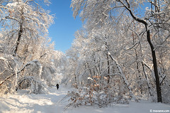 fairy tale in Plovdiv , Lauta park (.:: Maya ::.) Tags: park blue winter sky woman white snow forest walking alley woods human  treet plovdiv    lauta         mayaeye mayakarkalicheva