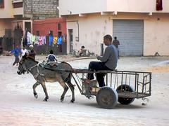 Donkey Cart, Dakhla
