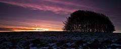 wingreen sunrise (Si Photography) Tags: camera trees sky sun snow simon ice beautiful grass sunrise canon landscape photography eos view si hills dorset 500 rise shaftesbury 550 photogaphy wingreen 600d maidment kindestsi sphm17aolcom