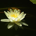 "Lotus<br /><span style=""font-size:0.8em;"">Nome/Autor: Ricardo Bessa<br /></span> • <a style=""font-size:0.8em;"" href=""https://www.flickr.com/photos/72855537@N05/6816738575/"" target=""_blank"">View on Flickr</a>"