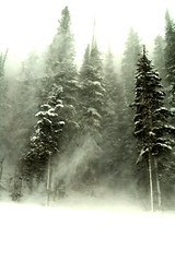 Blizzard (albinobobman) Tags: white mountain snow tree forest colorado wind hike blizzard