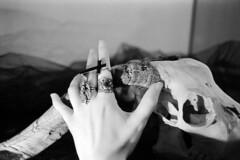 Witch (Ira Corvi) Tags: skull hand goat ring 400 analogica fm2 fomapan