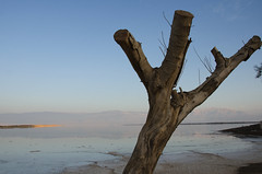 dead tree on the dead sea -  albero morto sun Mar Morto (romanato roberto) Tags: sea sun lake tree water dead lago israel mar nikon sale ngc salt 200 roberto 18 albero acqua israele vrii d7000 romanato morsto