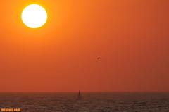 Sailing1278 (mcshots) Tags: ocean california sunset sea sky usa sun beach nature water birds sailboat coast boat sailing stock flight socal mcshots swells springtime losangelescounty