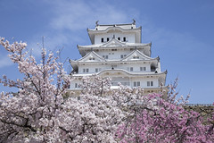 201604024261 (K.masao) Tags: castle cherrytree nationaltreasure himejijo japanmasaokatayama