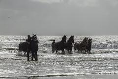 2016-Ameland053 (Trudy Lamers) Tags: wadden ameland eiland paarden reddingsboot reddingsactie