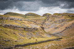 Malhamdale (Mariusz Talarek) Tags: uk england nature walking landscape outdoors countryside nikon outdoor hiking yorkshire dslr northyorkshire pennines rambling malham naturephotography naturelover malhamdale landscapephotography outdoorphoto d90 naturephoto naturephotographer outdoorphotography onahike outdoorphotographer nikond90 landscapephotographer landscapephoto mtphotography addicted2walking