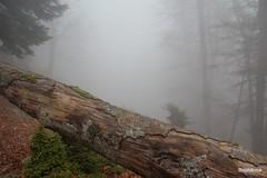 Foggy forest 2 (StephAnna :-)) Tags: fog forest hdr 3xp stephanna
