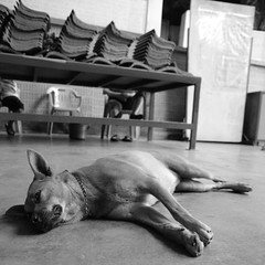 Guard? (HaIogen) Tags: dog animals square blackwhite olympus malaysia inside cave ipoh zd 1454mm e520