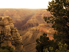 Warm Grand Canyon (TheJudge310) Tags: arizona orange hot tree warm day dusk grand canyon clear