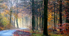 Magic Woodland (algo) Tags: uk autumn trees england leaves topv111 misty topf50 topv333 bravo colours trunks algo topf100 100f naturesfinest thechilterns 50f thechilternhills
