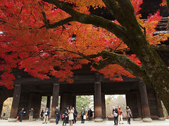 Finally, turned red in Kyoto (k n u l p) Tags: autumn red fall leaves maple kyoto olympus 京都 紅葉 ep1 zd 1122mm 南禅寺 京都市内やっとですよ