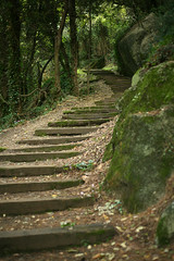 Fairy Tale Stairs (Katka S.) Tags: tree green heritage nature up rock stairs forest site stair dof path central unesco greece fairy mysterious shallow curve tale mystique reservation meteora kalambaka kapampaka