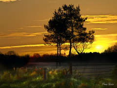 the sun rises on a new day .... (Explore / Frontpage) (Peter Roder) Tags: schnee trees summer sun mist lake snow storm reflection ice nature water grass leaves birds clouds farmhouse fence way landscape see frozen sonnenuntergang sundown crane wolken northsea memory footsteps thunderstorm gras zaun eis sonne bltter nordsee sonnenaufgang gewitter friesland weg reflektion dunst greyheron unwetter fischreiher kranich gefroren