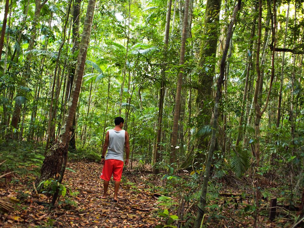 En medio de la jungla