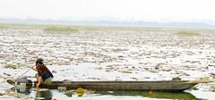 Life in Loktak (Monsoon Lover) Tags: life india boat women flickr politics society shakti sociology manipur imphal foggyday countryboat supershot manipu northeastindia loktak sudipguharay chitranggada