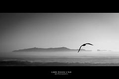Libre comme l'air (Guillaume Chanson) Tags: sea blackandwhite bw mer monochrome rock canon roc coast noiretblanc cte nb morocco maroc vague 169 essaouira rocher mouette panoramique seaguls mogador atlantique ocan canoneos450d assuwayrah