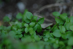 december greenery