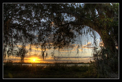 Sunset bajo el Arbol (Javier Huanay) Tags: light sunset sun nature clouds landscape agua nikon florida outdoor landing javier bradenton jiggs d7000 huanay