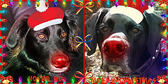 HAPPY CHRISTMAS EVERYONE! (Lady Of The Hounds) Tags: