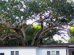 lawn-care-landscape-maintenance-tree-service-sarasota-venice-bradenton-8 (Quality Tree Service of Sarasota) Tags: venice tree landscape design dangerous oak florida crane landscaping quality lawn large commercial installation maintenance hauling cutting service sarasota care trimming removal residential bradenton condominium osprey removals nokomis