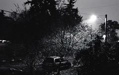 Day 334/365 - Early Morning with the New Lens (Great Beyond) Tags: november trees blackandwhite bw slr film monochrome car night analog eos dawn blackwhite streetlight streetlamp iso400 earlymorning ishootfilm 35mmfilm porch 365 3000v ilford lightpole canonrebelti c41 2011 project365 samyang ilfordxp2super400 filmisnotdead canoneosrebelti rokinon november2011 rokinon35mmf14aspherical