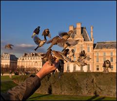LA JOIE, LA FAIM ET LE VIDE (ESOX LUCIUS) Tags: christmas paris birds taco sparrow tuileries parijs 2011 abigfave