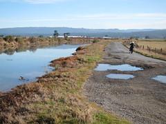 Humboldt Bay - Jackson Ranch Road (sisqknothome) Tags: king tides hightide humboldtbay northcoast bay tide 2011 coast high north humboldt california ca initiative tides cakingtides californiakingtidesinitiative