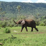 "Elephant <a style=""margin-left:10px; font-size:0.8em;"" href=""http://www.flickr.com/photos/14315427@N00/6591839225/"" target=""_blank"">@flickr</a>"
