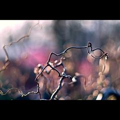 gelenkig (~janne) Tags: park wedding plant berlin nature 50mm licht flora bokeh f14 natur pflanzen olympus volkspark baum wetzlar rehberge leitz kringel janusz manuell summiluxr e520 ziob