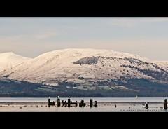 Snow on the mountain (w.mekwi photography [here & there]) Tags: winter seagulls snow mountains birds pier hills balloch lochlomondshores valeofleven nikond7000 wmekwiphotography mekwicom