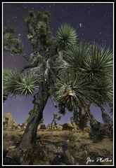other worldly (slo-jo) Tags: night stars nationalpark joshuatree southerncalifornia