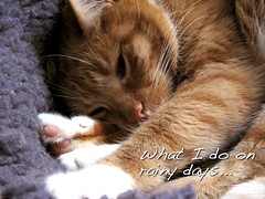 Lazy day (Andylinchen) Tags: home colors rain animal cat canon germany deutschland natur taco g10 canonpowershotg10